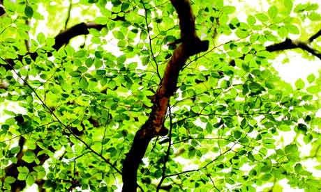 Scientists explore how the humble leaf could power the planet